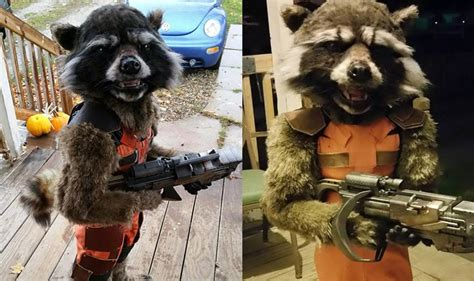 rocket raccoon costume epic guardians of the galaxy rocket racoon costume