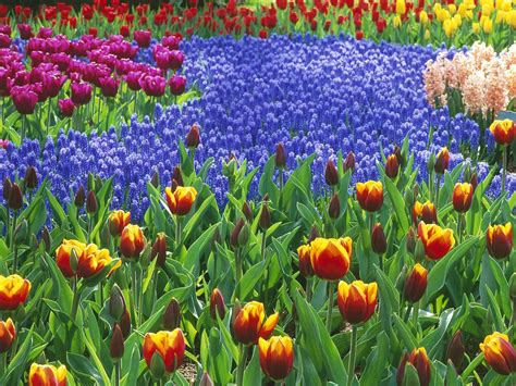 flower garden images theonlineflowergarden com blog 5 simple steps to start a