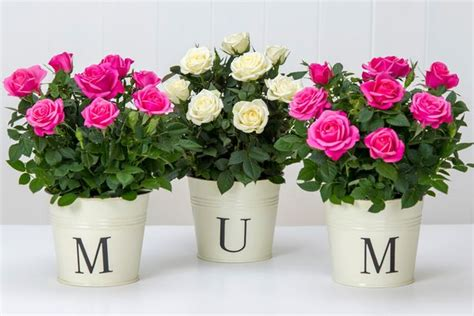 flowers for mothers day mother s day 2016 flowers gifts and all you need to know