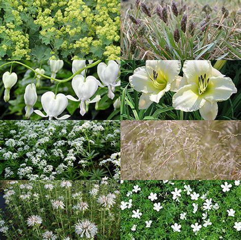 witte border bloemen de mooiste borderplanten en combinaties mijntuin org