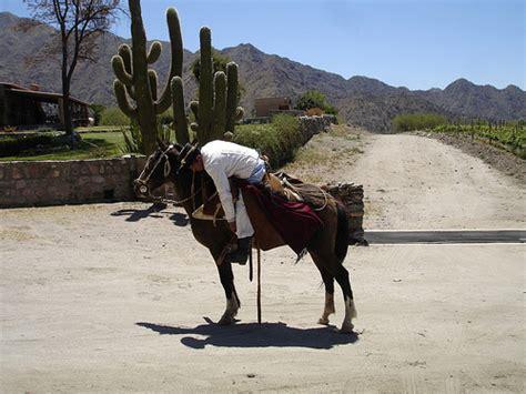 fotos de nenas mamando a caballos horse pictures from panama the equinest