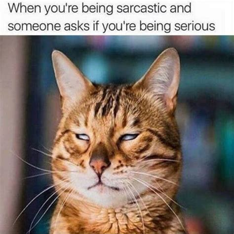 Sarcastic Cat Meme - related keywords suggestions for sarcastic cat