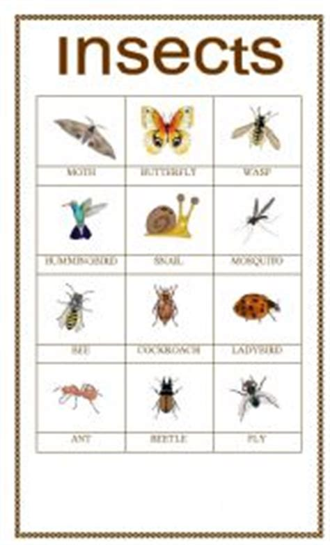 backyard bugs 101 flashcards for discovering insects books esl worksheets insects pictionary