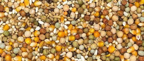 pigeon cuisine vanrobaeys belgian top quality pigeon feed