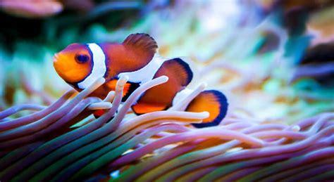 los peces de la peces en peligro de extinci 243 n webanimales com