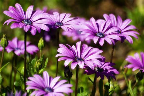 significati dei fiori il significato dei fiori lo sapevate vivovedoscrivo