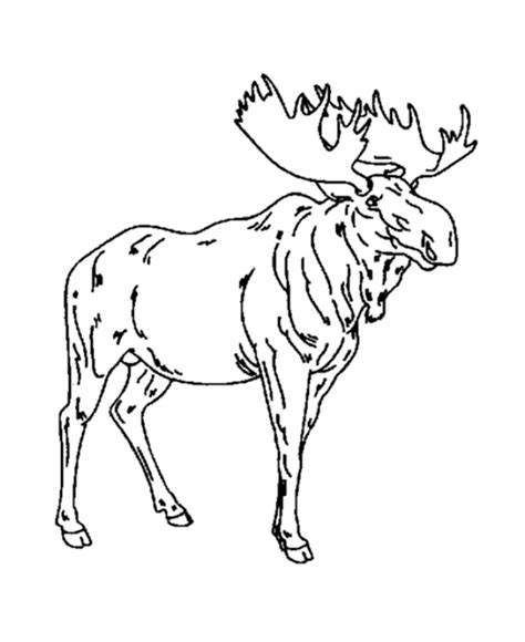 Drawing Of A Moose Coloring Home Moose Colouring Pages