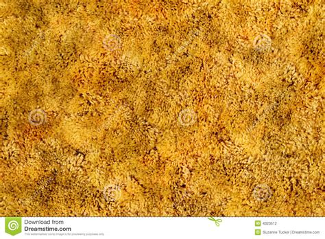 Golden On Carpet by Gold Shag Carpet Stock Photography Image 4323512