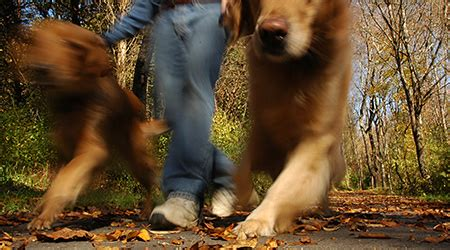 when to start walking a puppy how to start a walking business stockmonkeys