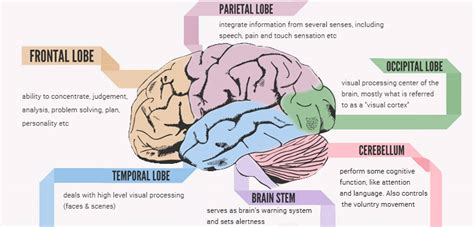 human brain mapping how human brain mapping can help you understand this master organ