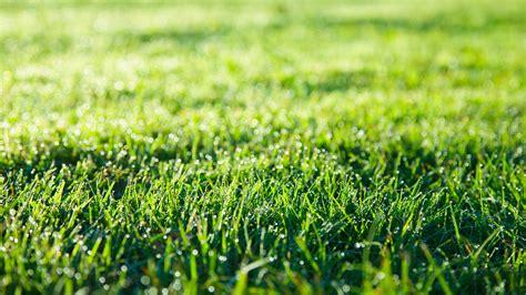 Rasen Säen Wann 5389 by Wie Bek 228 Mpft Moos Im Rasen Unkraut Moos Hexenringe Im