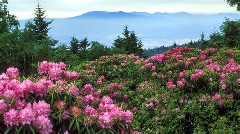 North Carolina Flower by Mountain Flowers North Carolina Wallpaper