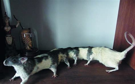 Decorate Apartment These Bizarre Taxidermy Creations Seem To Tell Good Taste