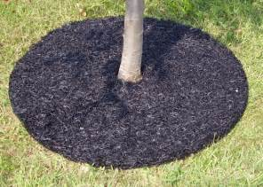 mulching around trees plants images