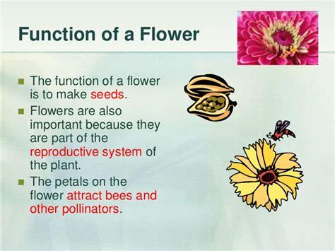 edu 653 slide presentation