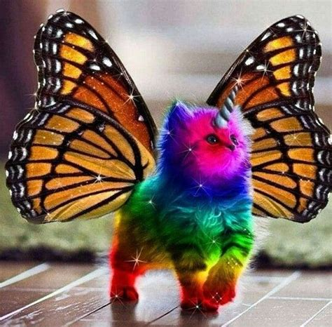cute caticorn images  pinterest  unicorn