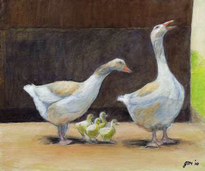 buff pomeranian geese heritage livestock canada breed animal work