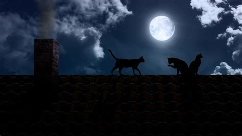 wallpaper cat night cats full hd wallpaper and background image 1920x1080