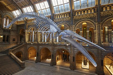 Foyer Interior by Whale Skeleton Takes Centre Stage At London S Natural