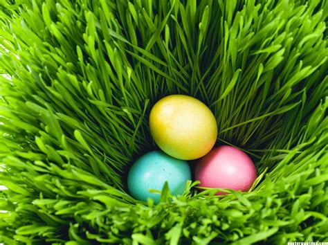 easter egs top 20 easter eggs 2017 pictures hd images