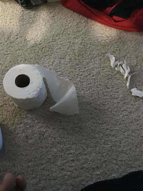 dog destroyed   roll  toilet paper coronavirusmeme