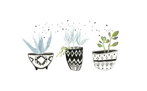 design love fest true botanicals watercolor succulent plants pinterest watercolor