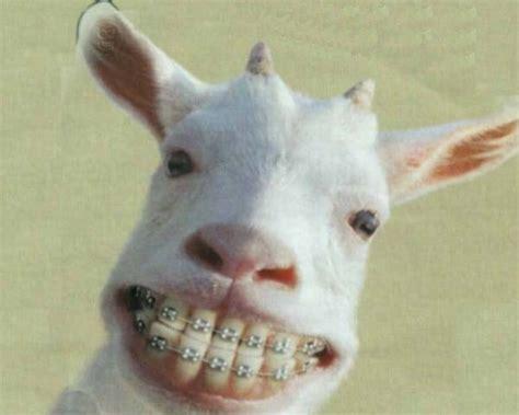 testi umoristici divertenti per avere denti belli da grande immagine divertente