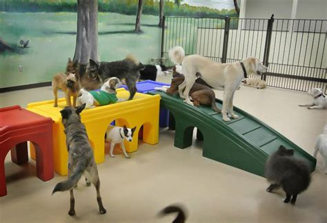 day care for puppies daycare peoria il my s bakery daycare grooming