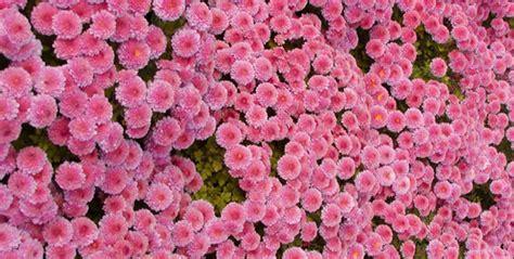 fiori per i morti biblioteca giubileo i fiori e le piante dei morti