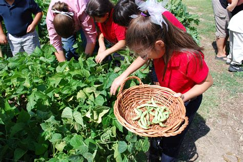 School Vegetable Gardens Roswell Students Learn Healthy Habits Through Extension