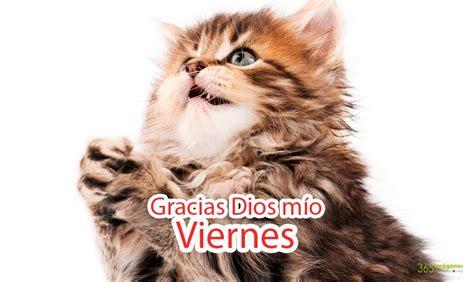 imagenes gracias a dios es viernes im 193 genes de animales y fotograf 237 as lindas para compartir