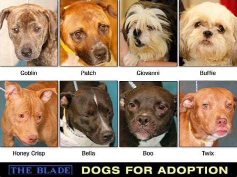puppies for adoption toledo ohio lucas county dogs for adoption 10 10 the blade
