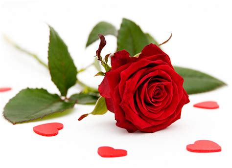 valentines day roses delivery send valentines day flowers valentines delivery uk