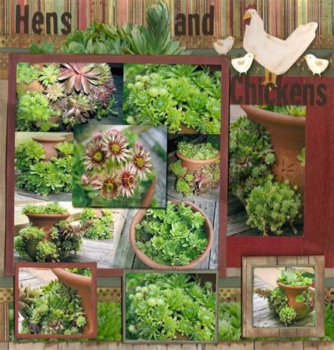 Hens And Planter Ideas by Pin By Jones On Serious Gardening