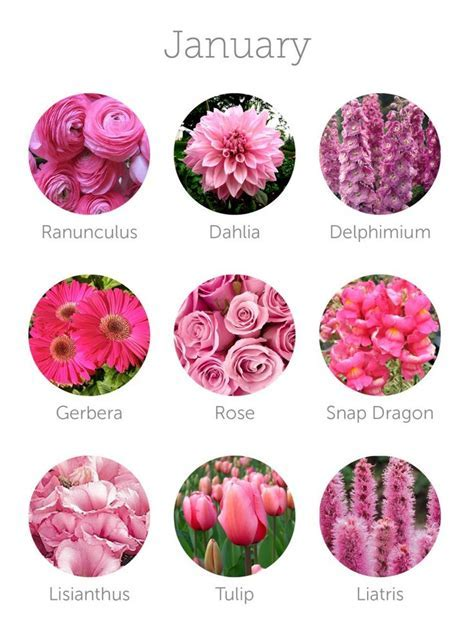 Best 25  January Flower ideas on Pinterest   What month is