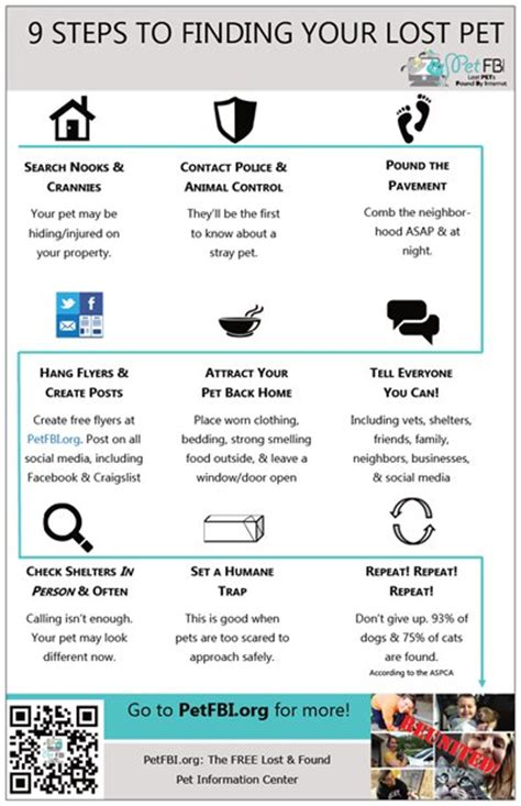 finding a lost 9 steps to finding a lost pet infographic pet fbi