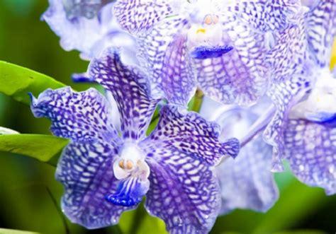 immagini fiori stupendi pin disegni di orchidee da colorare imagixs on