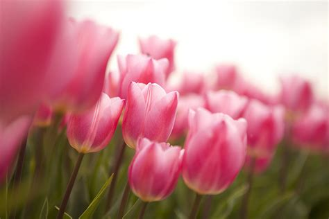 blumen ostern easter flowers ford church