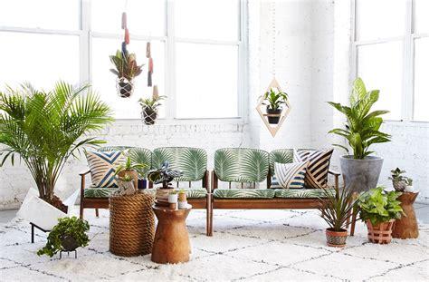 tanaman  hias interior rumah  tidak