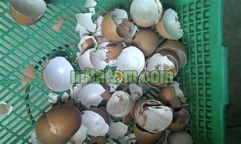 Pupuk Untuk Penyubur Bunga pemanfaatan limbah dapur sebagai penyubur tanaman