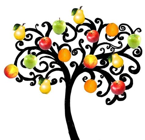 fruit tree drawing fruit tree drawing clipart best