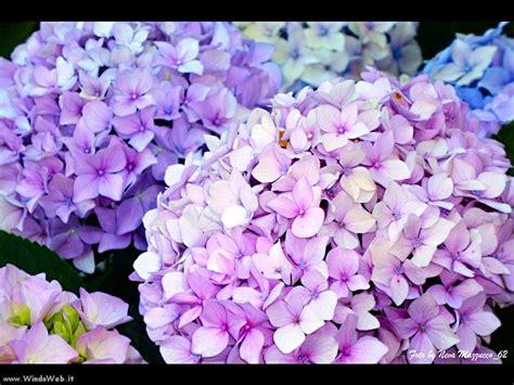 foto fiori fiori belli