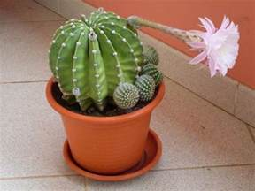 image gallery names of cactus plants