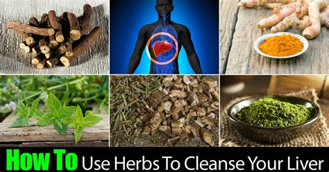 Liver Detox Herbal Remedy by How To Use Herbs To Cleanse Your Liver