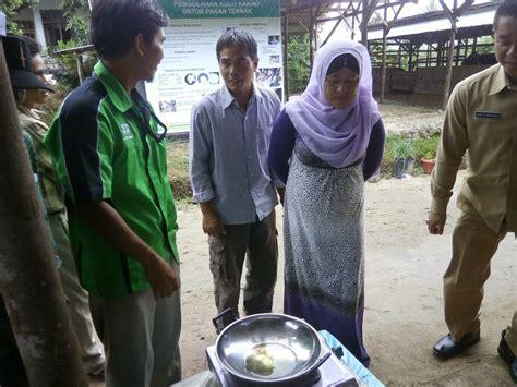 Bibit Sapi Payakumbuh supriyadi reza pahlepi walikota payakumbuh goreng telur