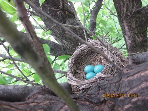 robin s nest by sweetkittycat on deviantart