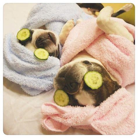 pug spa best 25 spa ideas on rooms pools and salon