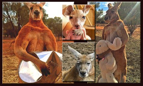 Roger the Kangaroo: From joey to Hey Joe!   Communities