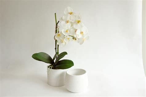vaso orchidee vasi per orchidee vasi tipologie di vasi per orchidee