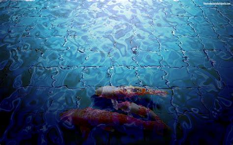 hd koi fish wallpaper wallpapersafari